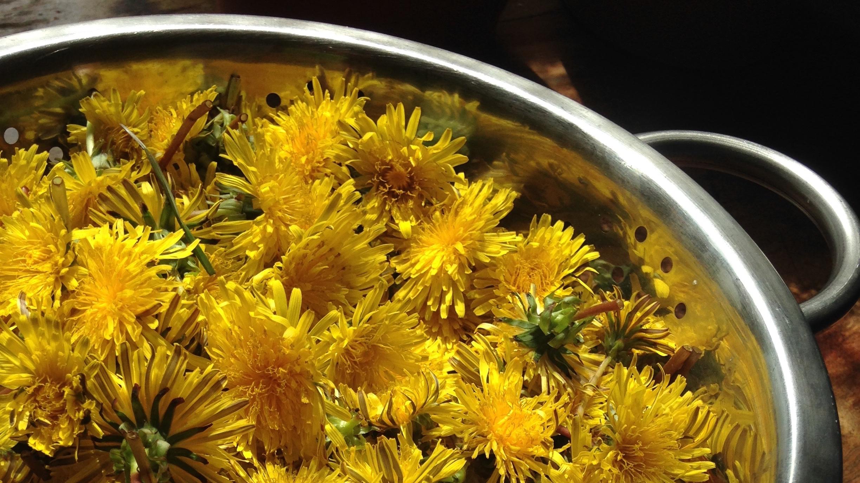Dandelion Vegan Honey